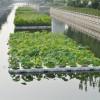 绿化浮岛 想要实惠的人工浮岛就来河北莲源水生植物
