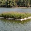 北京人工浮岛-想要生态浮岛就来河北莲源水生植物