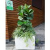 思明花卉租摆哪家好-有口碑的厦门绿植租摆,优选绿意海