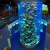 大型鱼缸价格如何-海瑶水族价格划算的大型亚克力鱼缸供应