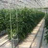 基质椰糠栽培订制_山东专业的基质椰糠栽培生产基地