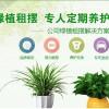 哈尔滨绿植花卉租赁信息 便利的哈尔滨花卉租赁