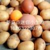 油炸迷你小土豆上哪买比较实惠|油炸小土豆代理商