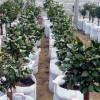 平顶山供销植树袋-专业厂家供应各类无纺布植树袋