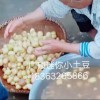 广硕商贸有限公司-信誉好的迷你小土豆供应商 武威油炸小土豆供应商