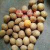 枣庄专业的迷你小土豆批发-江苏油炸小洋芋