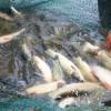 河北出口水产品批发-为您推荐质量好的水产品