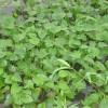 惠州人工湿地工程_知名的人工湿地工程推荐