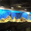 海洋馆造景-上海可靠的亚克力鱼缸设计公司推荐