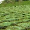 沈阳植生袋供应厂家|想购买优惠的植生袋优选沈阳边坡绿化