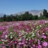 陕西草种代理_想买销量好的陕西进口草种,就到诚信环保科技