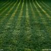 草坪基地|优良的草坪出售