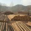 防腐木杆厂家-怎样才能买到有品质的防腐木杆