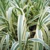 梅州湿生植物-供应广东成活率高的湿生植物