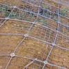 湖北蜘蛛网-可靠的绞索网供应信息