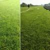 银川草坪-病虫害低的银川草坪出售