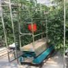 广西基质椰糠栽培-承航景观工程专业供应基质椰糠栽培