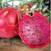 农作物销售价格范围_滨州优良农作物种子供应