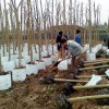 平顶山优惠的植树袋_郑州纯挚环保科技有限公司_口碑好的无纺布植树袋提供商