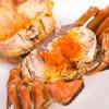盘锦六月黄蟹价钱如何|盘锦有品质的盘锦六月黄蟹哪里有供应