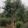 鞍山园林绿化-辽宁信誉好的园林绿化公司