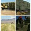 燕麦种子批发-知名的燕麦种子供应商
