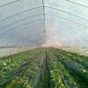 山东西瓜专用膜-潍坊高性价西瓜专用膜哪里有供应