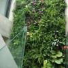 广州立体绿化公司推荐-可信赖的广东垂直立体绿化生态设计公司