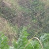 菱形边坡防护网厂家|供应成帅优惠的菱形边坡防护网