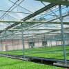 智能养殖温室建设-报价合理的阳光板温室大棚推荐