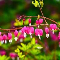 宿根花卉是什么