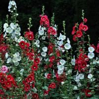 苗木花卉的分类