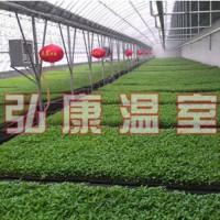 育苗温室建造