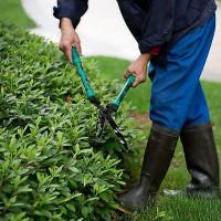 承接绿化设计施工养护一条龙服务