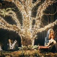 怎样能够点亮一座城?树木亮化成为新选择