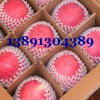 3月陕西冷库红富士苹果价格,冷库纸袋红富士苹果批发价格
