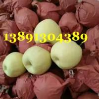 陕西冷库酥梨价格,冷库纸袋砀山酥梨产地批发价格
