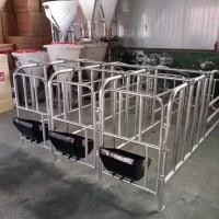 母猪限位栏单体栏猪用定位栏十个猪位带食槽限位栏