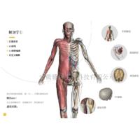 解剖学仿真虚拟实验系统